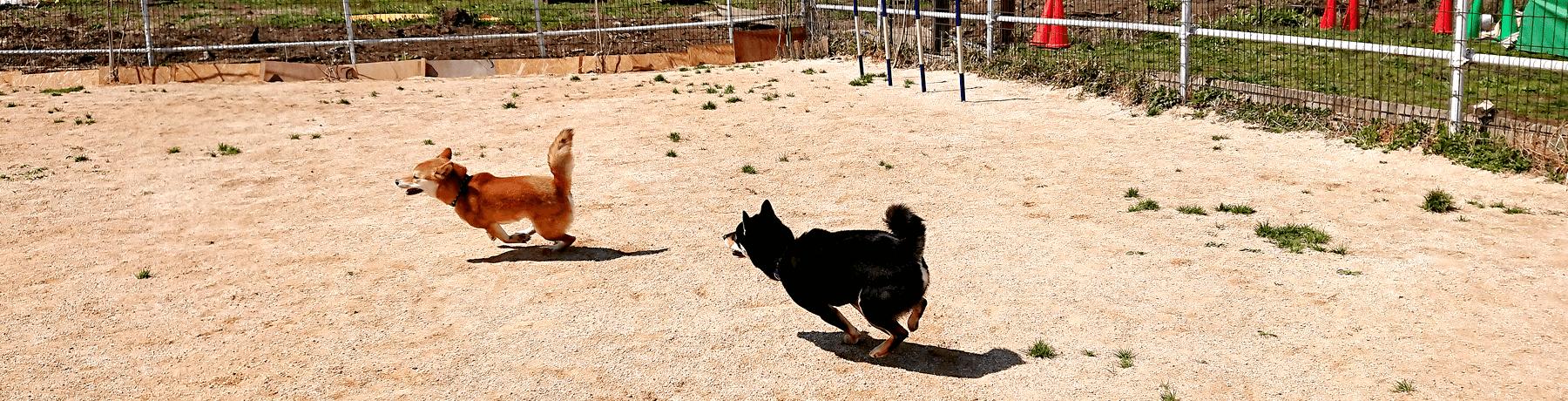 アクセス|茨城県つくば市の犬のしつけ・訓練・トレーニングなら「ドッグスクール山口」