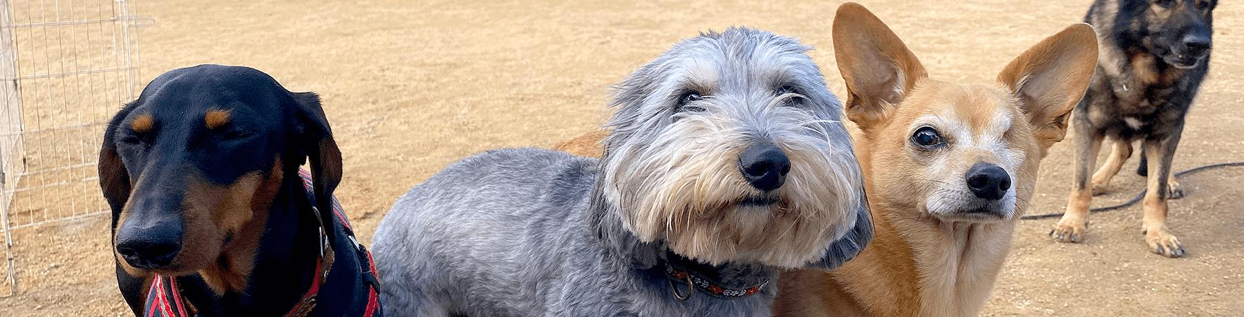 お問い合わせ|茨城県つくば市の犬のしつけ・訓練・トレーニングなら「ドッグスクール山口」