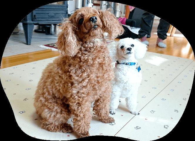 出張コース|茨城県つくば市の犬のしつけ・訓練・トレーニングなら「ドッグスクール山口」