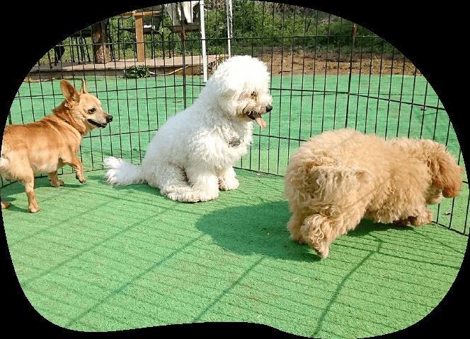 保育園コース|茨城県つくば市の犬のしつけ・訓練・トレーニングなら「ドッグスクール山口」