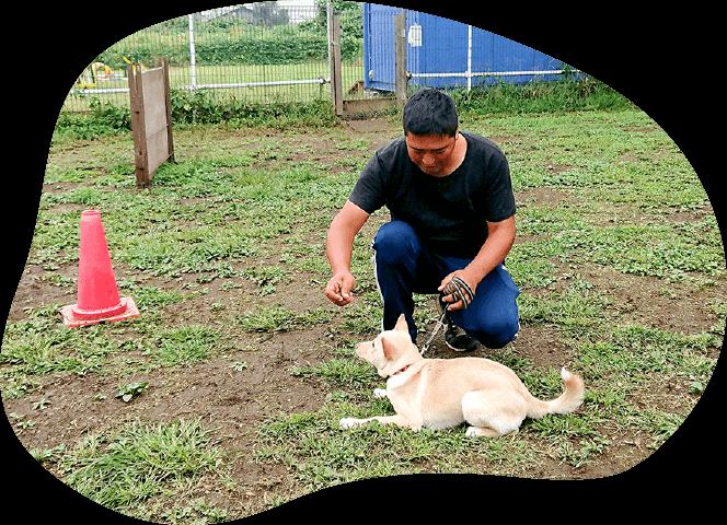 預かり訓練|茨城県つくば市の犬のしつけ・訓練・トレーニングなら「ドッグスクール山口」