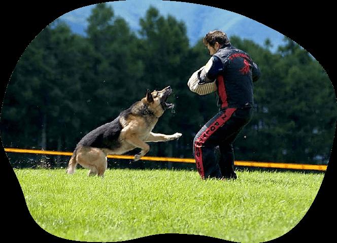 競技会や使役犬の育成コース|茨城県つくば市の犬のしつけ・訓練・トレーニングなら「ドッグスクール山口」