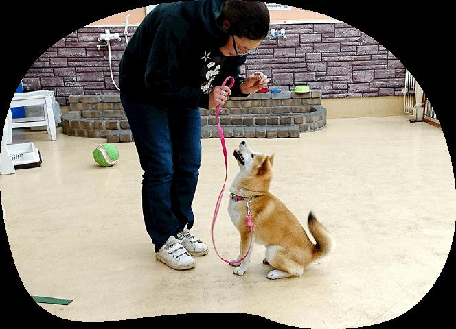 しつけ教室情報|茨城県つくば市の犬のしつけ・訓練・トレーニングなら「ドッグスクール山口」