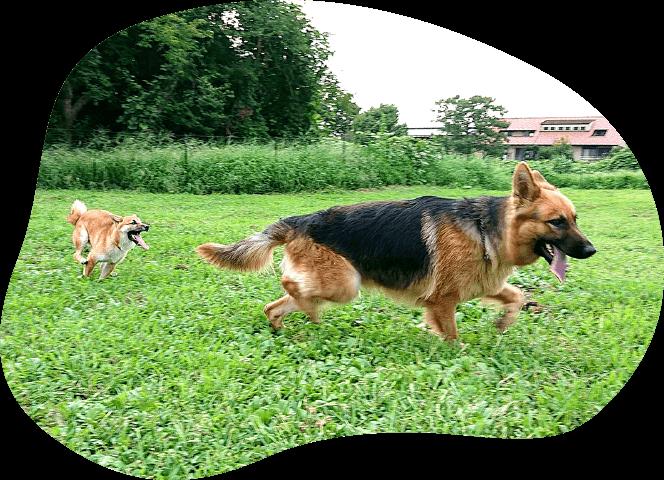 ドッグラン|茨城県つくば市の犬のしつけ・訓練・トレーニングなら「ドッグスクール山口」