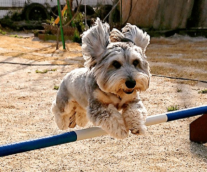 写真ギャラリー|茨城県つくば市の犬のしつけ・訓練・トレーニングなら「ドッグスクール山口」