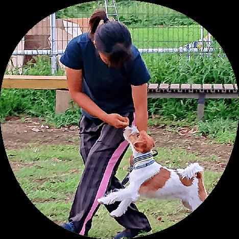 スタッフ紹介|茨城県つくば市の犬のしつけ・訓練・トレーニングなら「ドッグスクール山口」