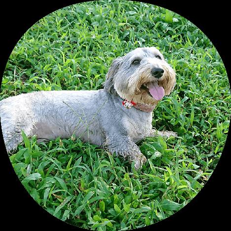 リンク集|茨城県つくば市の犬のしつけ・訓練・トレーニングなら「ドッグスクール山口」
