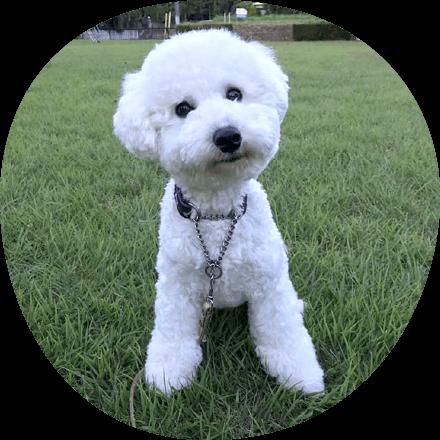 アンケート|ギャラリー|茨城県つくば市の犬のしつけ・訓練・トレーニングなら「ドッグスクール山口」
