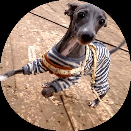 写真ギャラリー|ギャラリー|茨城県つくば市の犬のしつけ・訓練・トレーニングなら「ドッグスクール山口」