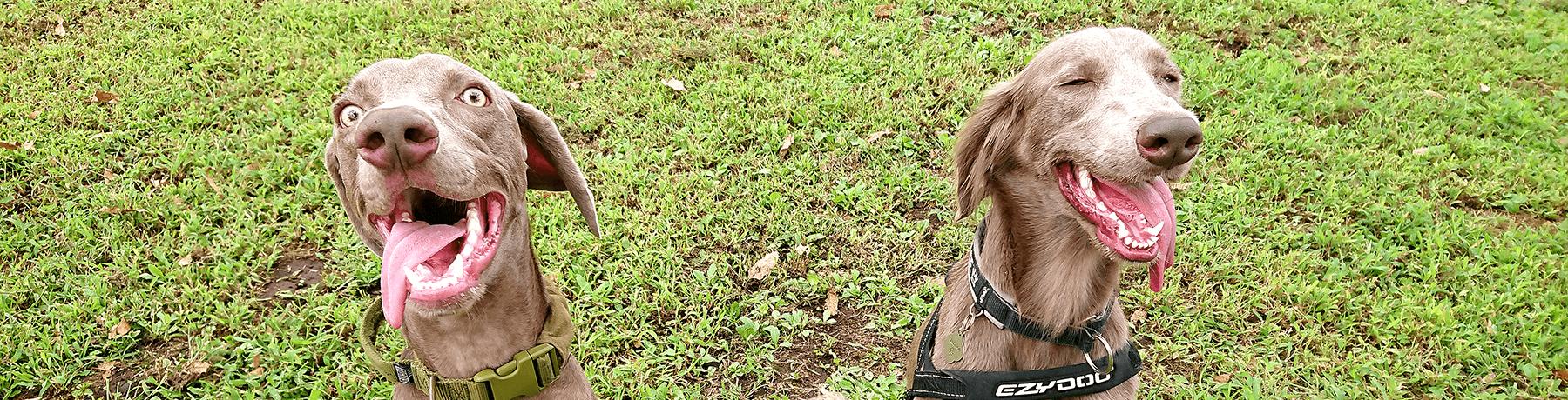 ギャラリー|茨城県つくば市の犬のしつけ・訓練・トレーニングなら「ドッグスクール山口」