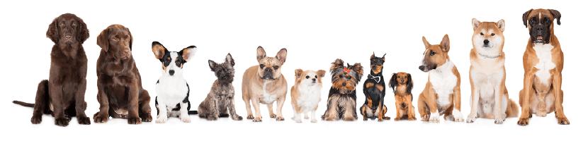 料金表 茨城県つくば市の犬のしつけ・訓練・トレーニングなら「ドッグスクール山口」