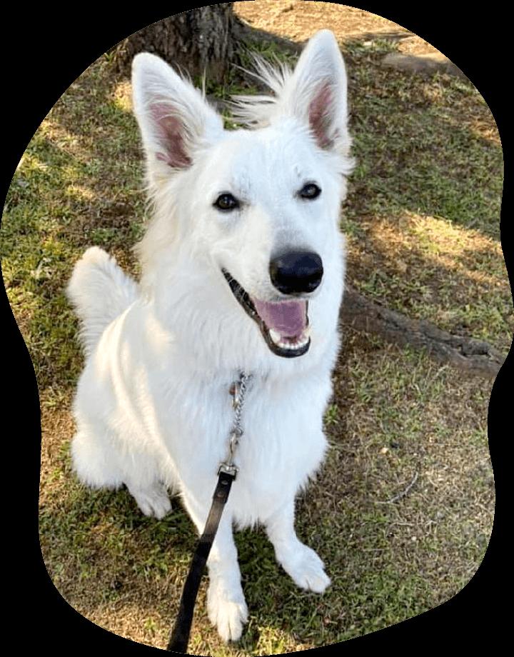 ロック|アンケート|茨城県つくば市の犬のしつけ・訓練・トレーニングなら「ドッグスクール山口」