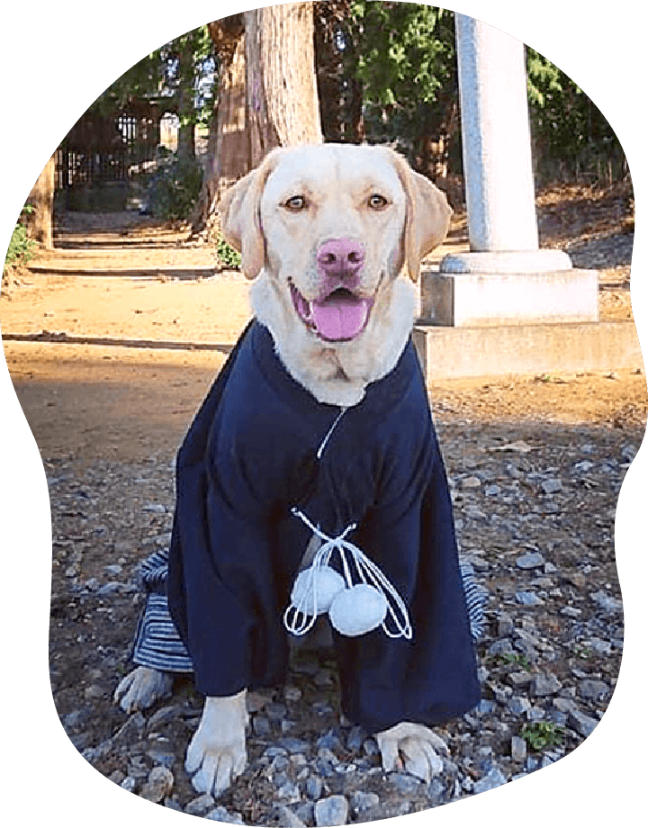 楽|アンケート|茨城県つくば市の犬のしつけ・訓練・トレーニングなら「ドッグスクール山口」