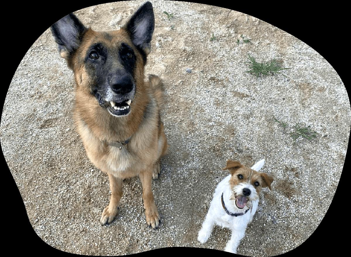 ハイディ・デビー|アンケート|茨城県つくば市の犬のしつけ・訓練・トレーニングなら「ドッグスクール山口」