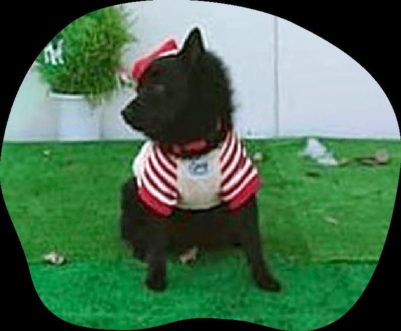 グリ|アンケート|茨城県つくば市の犬のしつけ・訓練・トレーニングなら「ドッグスクール山口」