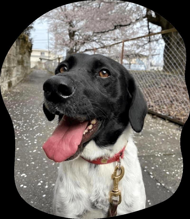 ゴマ アンケート 茨城県つくば市の犬のしつけ・訓練・トレーニングなら「ドッグスクール山口」