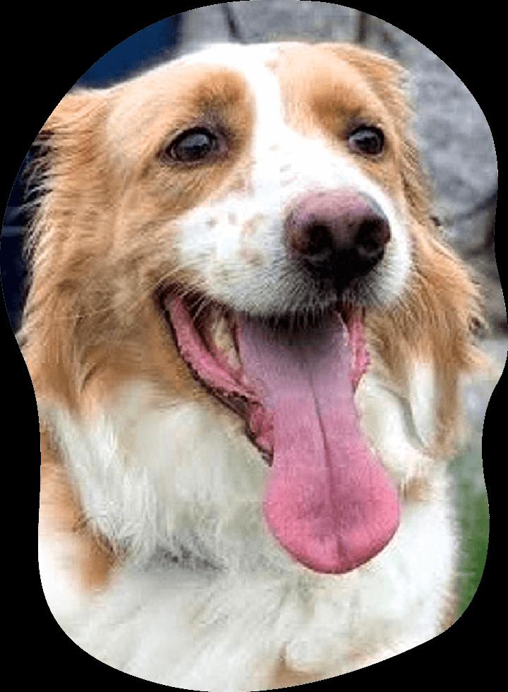 れよん アンケート 茨城県つくば市の犬のしつけ・訓練・トレーニングなら「ドッグスクール山口」