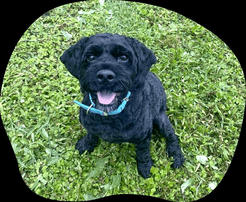 陸|アンケート|茨城県つくば市の犬のしつけ・訓練・トレーニングなら「ドッグスクール山口」