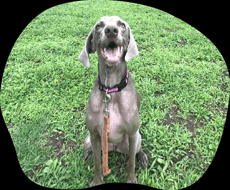 ヒュイ|アンケート|茨城県つくば市の犬のしつけ・訓練・トレーニングなら「ドッグスクール山口」