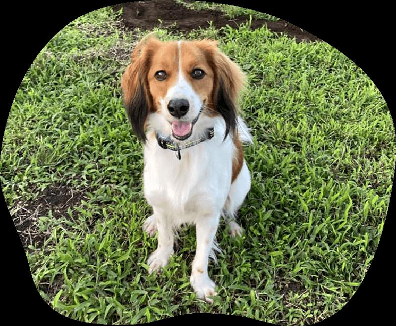 はな|アンケート|茨城県つくば市の犬のしつけ・訓練・トレーニングなら「ドッグスクール山口」