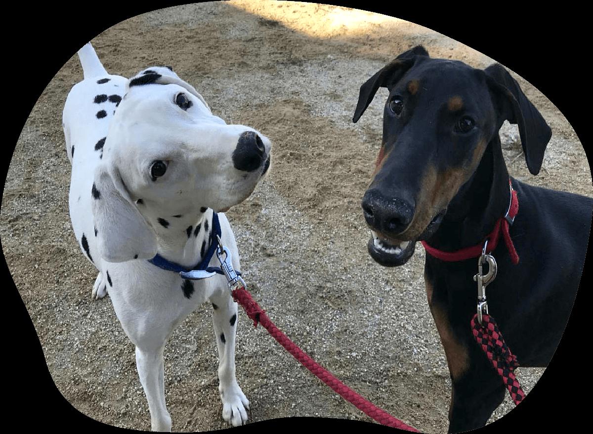 凪冴・汐織 アンケート 茨城県つくば市の犬のしつけ・訓練・トレーニングなら「ドッグスクール山口」