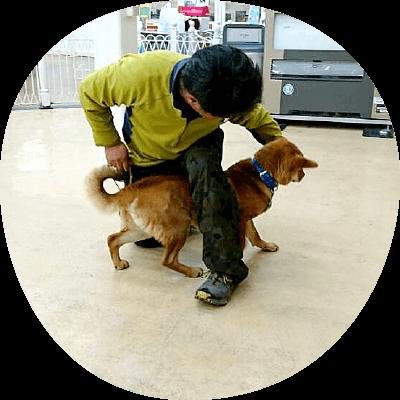サービス内容|茨城県つくば市の犬のしつけ・訓練・トレーニングなら「ドッグスクール山口」