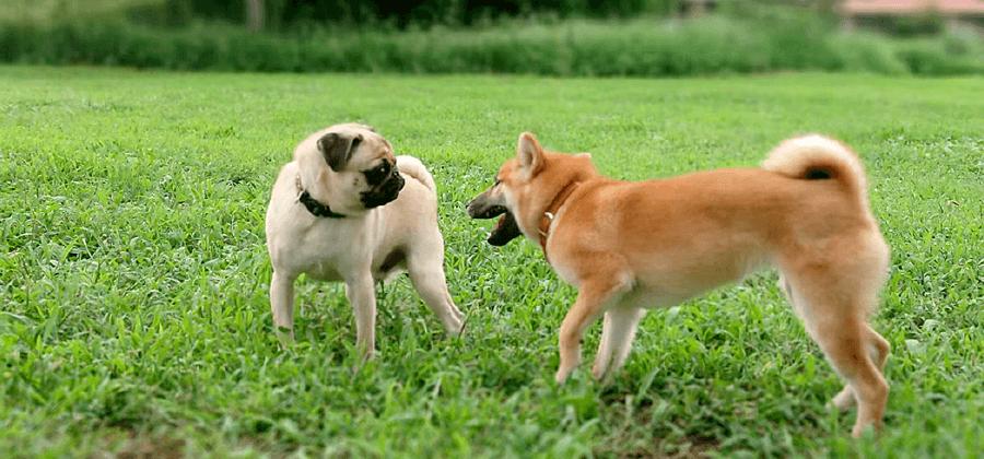 サイト利用規約|茨城県つくば市の犬のしつけ・訓練・トレーニングなら「ドッグスクール山口」