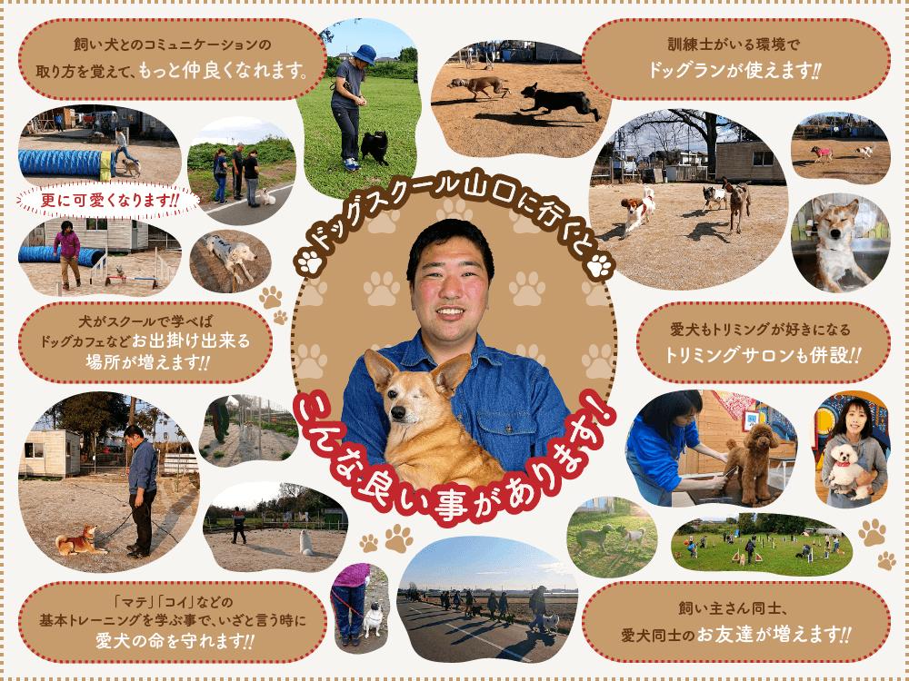 しつけの仕方|茨城県つくば市の犬のしつけ・訓練・トレーニングなら「ドッグスクール山口」