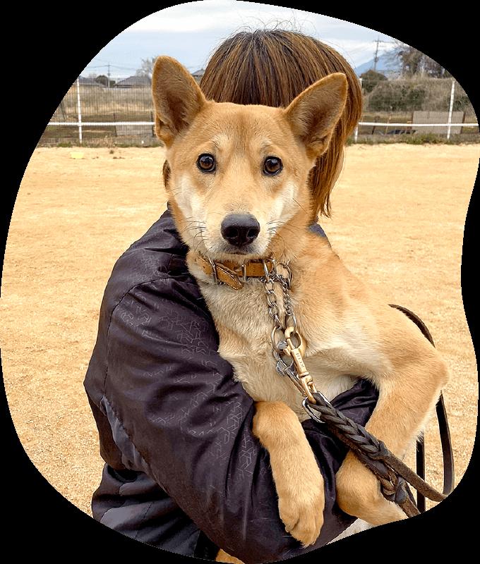 ボランティア活動|茨城県つくば市の犬のしつけ・訓練・トレーニングなら「ドッグスクール山口」