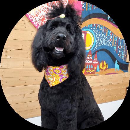 トリミングサロン「キレイ処 わしゃわしゃ」|茨城県つくば市の犬のしつけ・訓練・トレーニングなら「ドッグスクール山口」