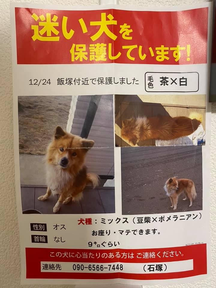 【拡散希望】迷い犬を保護しています!page-visual 【拡散希望】迷い犬を保護しています!ビジュアル