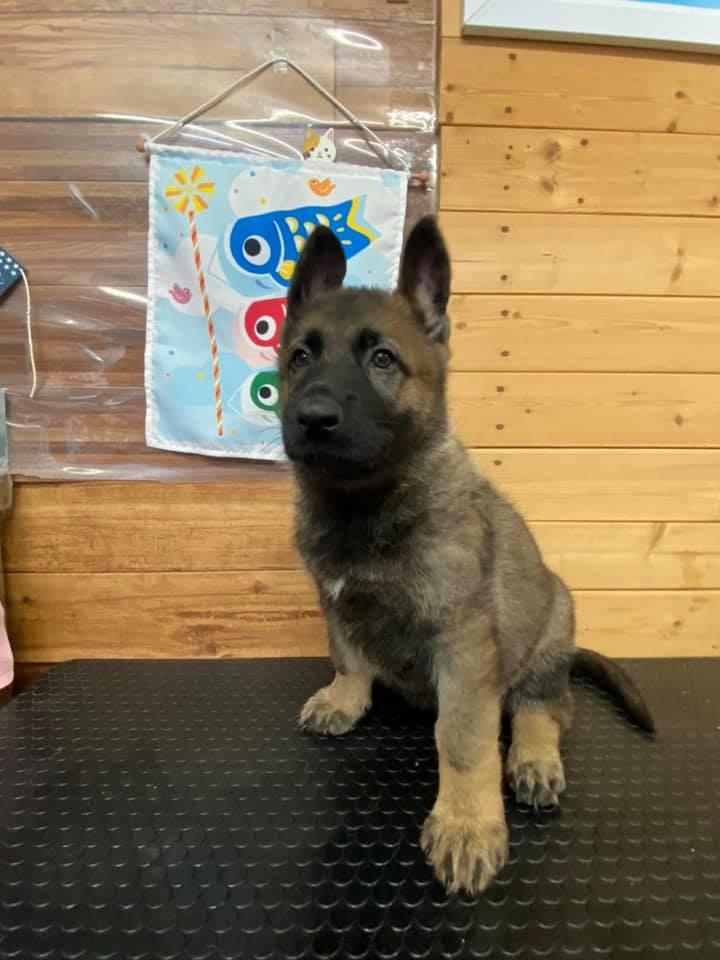 犬の見習い訓練士募集page-visual 犬の見習い訓練士募集ビジュアル